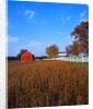 Farm in Autumn by Corbis