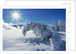 Snow on Trees at Lower Geyser Basin by Corbis