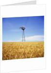 Windmill in Wheat Field by Corbis