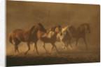 Herd of Horses by Corbis