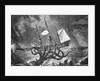 Seamonsters, The Kraken by Corbis
