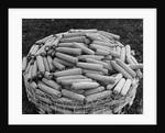 Hybrid Corn by Corbis
