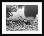 Passaic River W/Debris On Its Bank;Pollu by Corbis