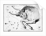 Engraving Of Taurus, Front Half Of Bull by Corbis