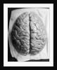 The Human Brain by Corbis