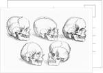 Vesalius' Engraving Of 6 Human Skulls by Corbis