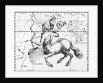 Engraving Of Constellation Sagittarius by Corbis