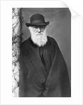 Charles Darwin by Corbis