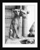 Gargoyle Of Cerebus At Notre Dame by Corbis