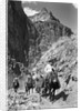 Mule Riders on Kaibab Trail by Corbis