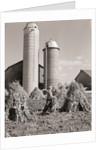 Man Gathering Shucks of Corn by Corbis