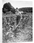 Woman Cultivating Corn Field by Corbis