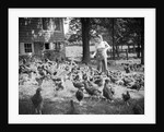 Woman Feeds Chickens From Bucket by Corbis