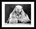 Polar Bear With Her Babies by Corbis