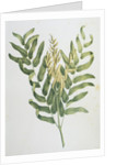 Illustration Depicting a Branch of a Royal Fern by Corbis