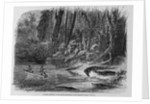 Alligator Shooting in the Swamps Bordering on the Mississippi River, Louisiana Illustration by Corbis