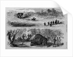 Elephant hunting in Africa - Prince Alfred of England engaging in the sport by Corbis