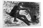 The Army of the Potomac Wood Engraving by Winslow Homer