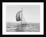 A Sailboat Running with Its Spinnaker Up by Corbis