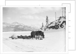 Horses and Sledge in the Klondike by Corbis