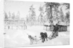 Man with Dogsled by Corbis