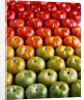 Red and Green Tomatoes by Corbis