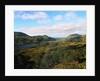 Landscape of Killarney National Park by Corbis
