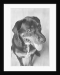 Dog Sitting by Corbis