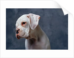 Dog Looking to Side by Corbis
