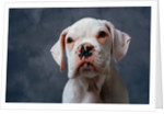 Face of Dog by Corbis
