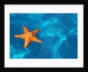 Starfish Floating on the Surface of the Ocean by Corbis