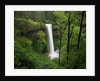 Waterfall Surrounded by Vegetation by Corbis