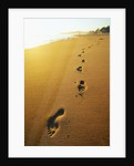 Footprints Along Beach by Corbis