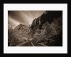 A Road in Zion National Park by Corbis