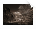 Mountains and Tree from Valley Floor by Corbis