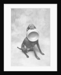 Dog Carrying Food Bowl by Corbis