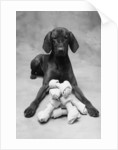 Dog with Pile of Bones by Corbis