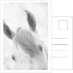 Top Half of Horse's Head by Corbis