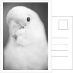 Parrot's Head by Corbis