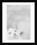 Cat's Head by Corbis