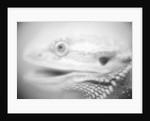 Side of Iguana's Face by Corbis
