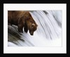 Brown Bear Fishing at Brooks Falls by Corbis