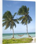 Hammock Attached to Palm Trees at Ocean by Corbis