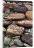Buddhist Prayers on Carved Mani Stones in Tibet by Corbis