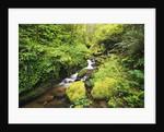 Creek Running Through Forest by Corbis