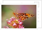 Butterfly Perching on Flower by Corbis