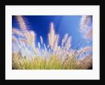 Grass by Corbis