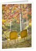 Yellow Chairs and Fall Foliage by Corbis
