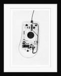 X-Ray of a Computer Mouse by Corbis