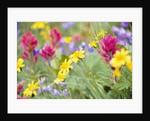 Flowers Growing in Field by Corbis